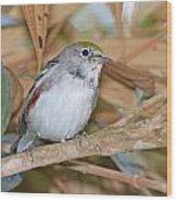 Chestnut-sided Warbler Wood Print