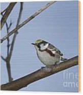 Chestnut Warbler Wood Print
