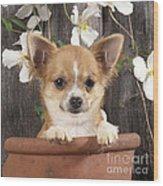 Chihuahua Dog In Flowerpot Wood Print