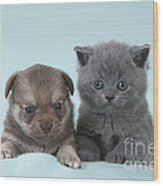 Chihuahua Puppy And British Shorthair Wood Print
