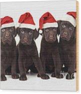 Chocolate Labrador Puppies Wood Print