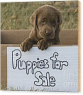 Chocolate Labrador Puppy Wood Print by Linda Freshwaters Arndt
