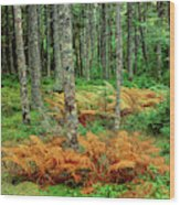 Cinnamon Ferns And Red Spruce Trees Wood Print