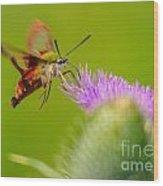 Clearwing Hummingbird Moth Wood Print