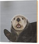 Close Up A Sea Otter In Prince William Wood Print