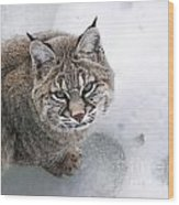 Close-up Bobcat Lynx On Snow Looking At Camera Wood Print