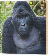 Close-up Of A Mountain Gorilla Gorilla Wood Print