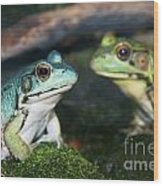Close-up Of Blue And Green Frogs Wood Print