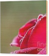 Close-up Of Red Rose With Water Drops Wood Print