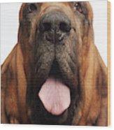 Close Up Portrait Of A Bloodhound Wood Print
