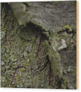Closeup Of Bark Covered In Lichen Wood Print