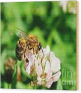 Clover Bee Wood Print
