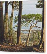 Coastal Rainforest Havelock Isl India Wood Print
