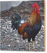 Cock On The Walk Wood Print