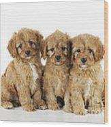 Cockapoo Puppy Dogs Wood Print