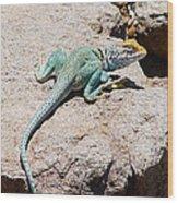 Collard Lizard  Wood Print