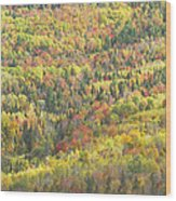 Colorful Autumn Forest In Mount Blue State Park Weld Maine Wood Print