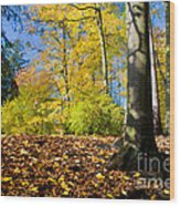 Colorful Fall Autumn Park Wood Print