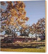 Colorful Trees Of Long Beach In The Autumn Wood Print