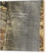 Common Beech (fagus Sylvatica) Wood Print