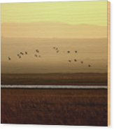 Common Cranes At Gallocanta Lagoon Wood Print