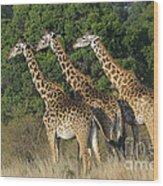 Common Giraffe Wood Print