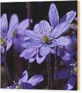 Common Hepatica Wood Print