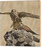 Common Kestrel Falco Tinnunculus Wood Print