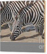 Common Zebras Drinking Water Wood Print