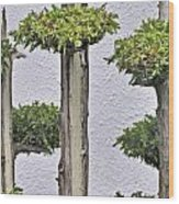 Companions Wood Print