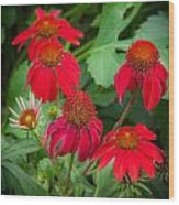Coneflowers Echinacea Red  Wood Print