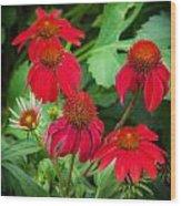 Coneflowers Echinacea Rudbeckia Wood Print