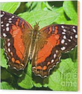 Coolie Butterfly Wood Print