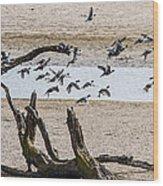 Coots-mud Hens Wood Print
