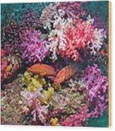 Coral Reef Scenery Wood Print