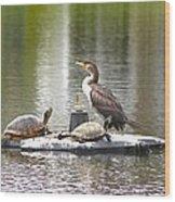 Cormorant And Turtle Duo Wood Print