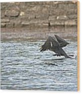 Cormorant Water Takeoff Wood Print