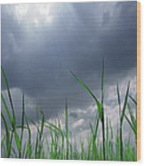 Corn Plant With Thunderstorm Clouds Wood Print