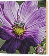 Cosmos Flower And Bee Wood Print