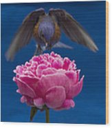 Count Bluebird Wood Print by Jean Noren