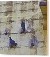 Couple Of Pigeons On A Wall Wood Print