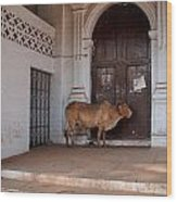 Cow At Church At Colva Wood Print