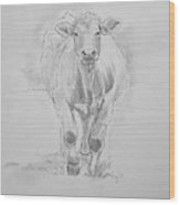 Cow Drawing Wood Print by Mike Jory