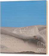 Coyote On Sand Dune Wood Print by Mark Newman