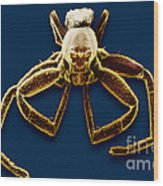 Crab Spider Wood Print
