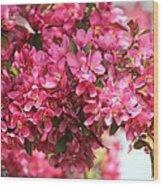Crabapple Tree Named Prairiefire Wood Print