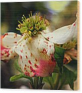 Cranberry Dogwoods Wood Print by Karen Wiles