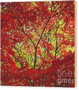 Crimson Window Wood Print