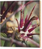 Crown Of Thorns Wood Print by Kelley King
