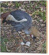 Crowned Crane And Eggs Wood Print